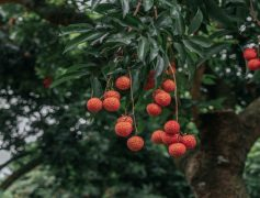 CRO Low-Hanging Fruits That Will Give You An Immediate Win